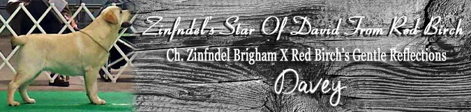 Zinfndel's Star Of David From Red Birch